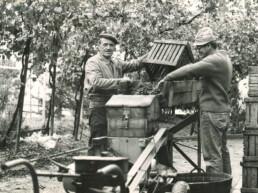 production de vinaigre balsamique de Modène depuis 1910-acetaia-marchi